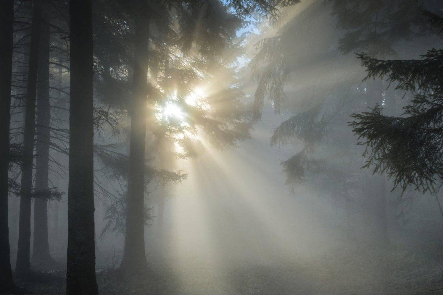 Rêver de lumière