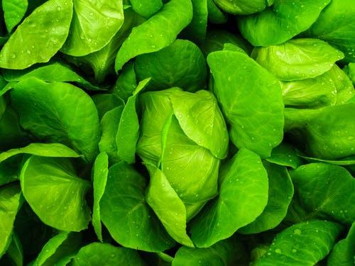 Rêver de salade