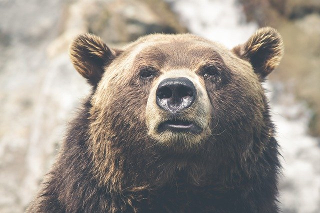 Rêver d'ours
