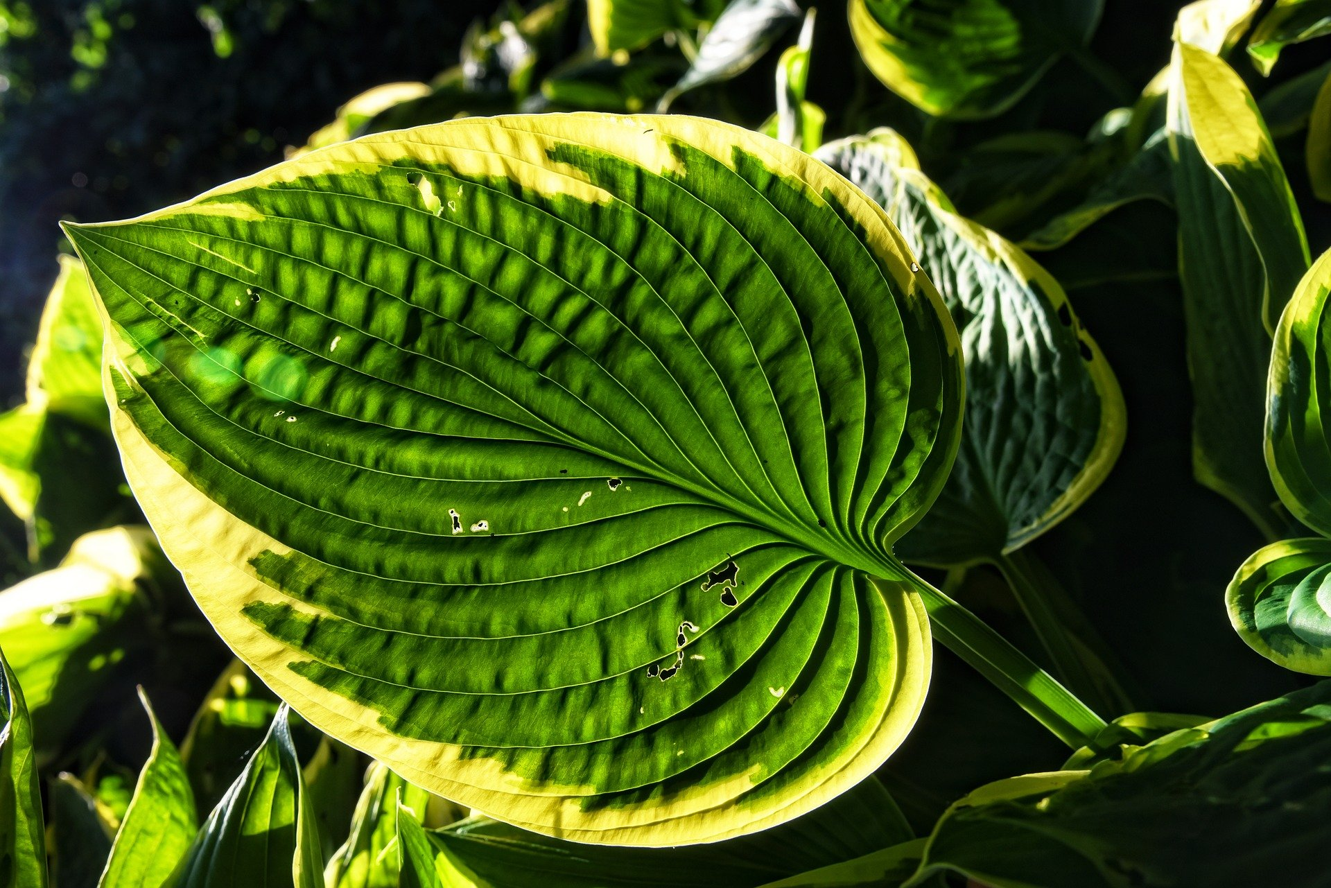 Rêver de plante