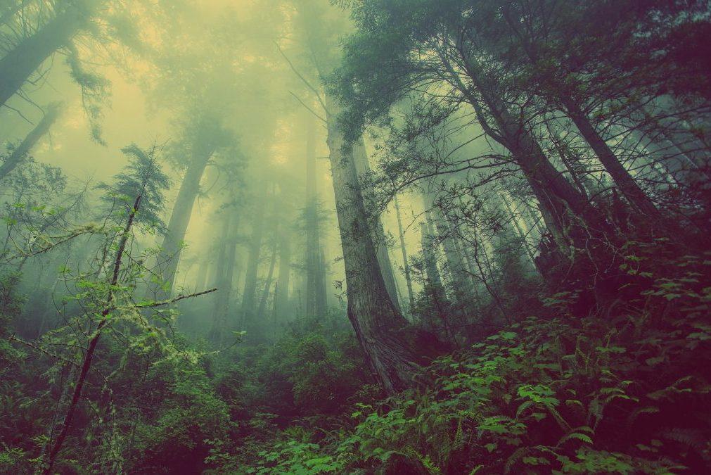 Rêver de forêt