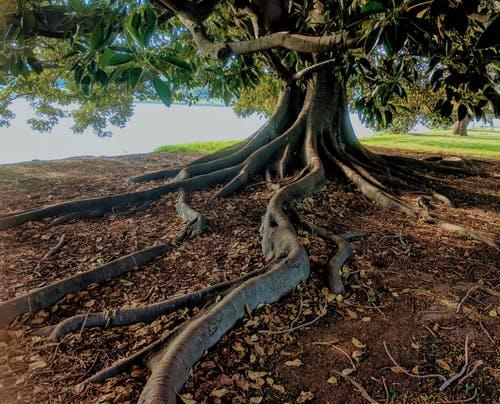 Rêver d'arbre