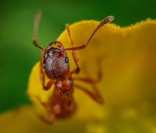 Rêver de fourmi