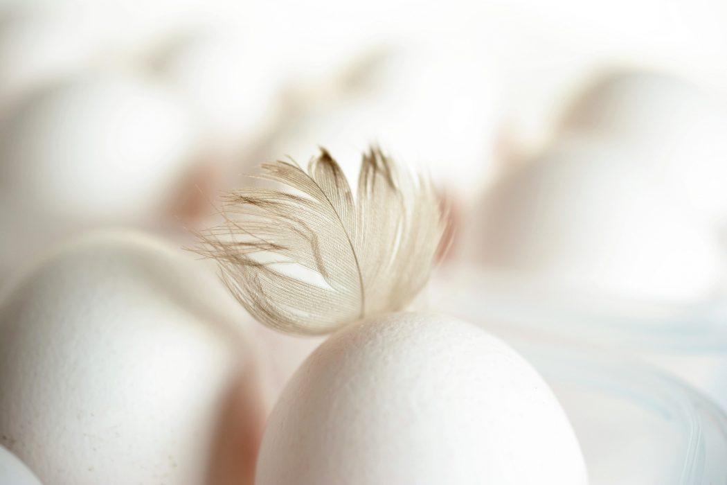 Rêver d'œuf