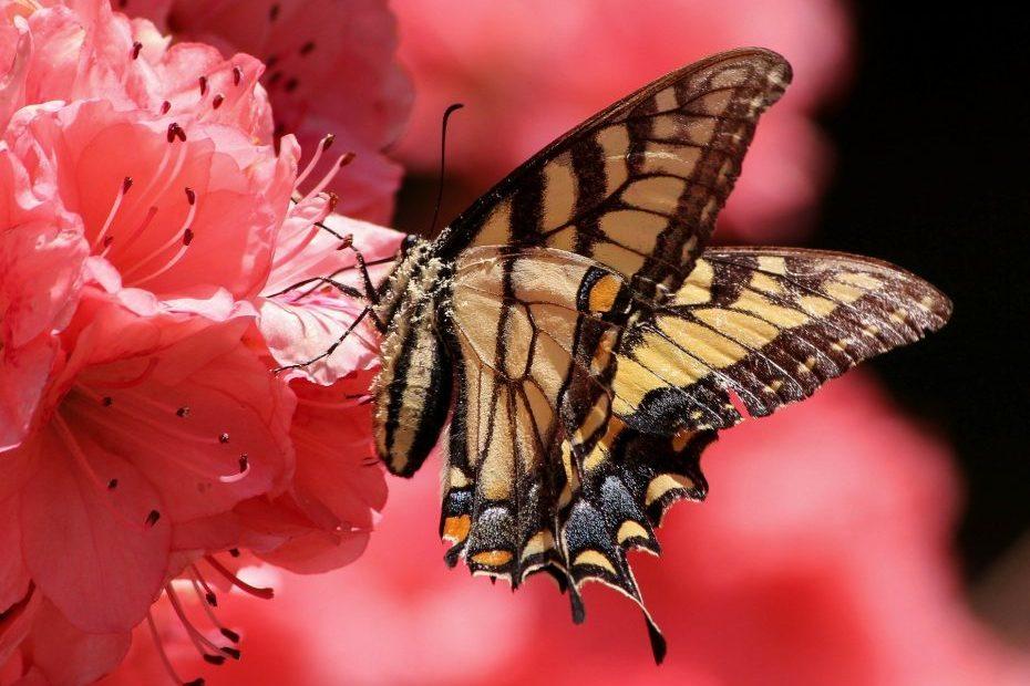 Rêver de papillon