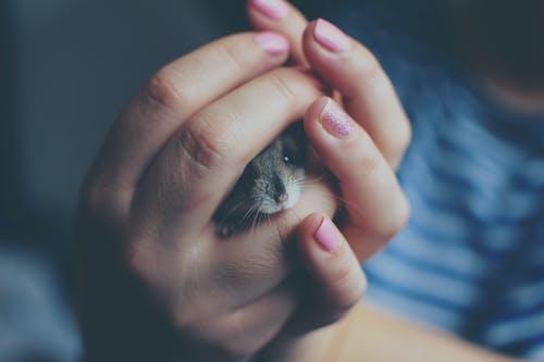 Rêver de souris